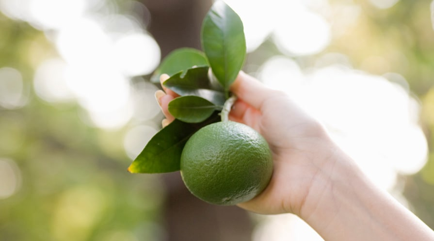 hand holding a lime