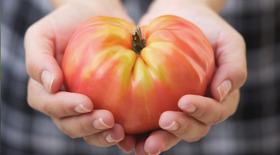 hand holding a large tomato