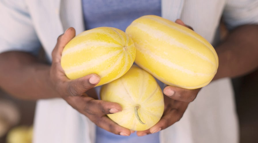 hands holding 3 spaghetti squashes