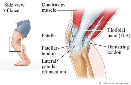 Picture of the knee muscles, ligaments, and tendons (outer-side view)